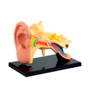 Модель анатомія вуха Edu-Toys збірна, 7,7 см (SK012)