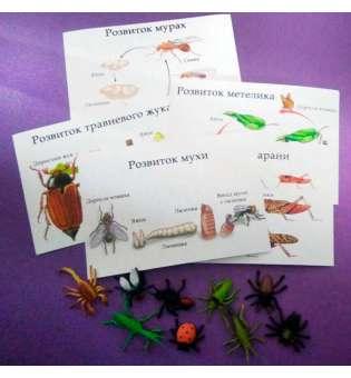 Набір карток та муляжів комах - Розвиток комах
