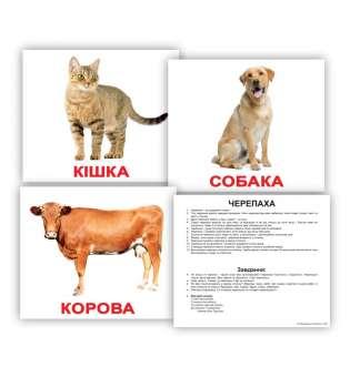 Картки Домана великі з фактами. Свійські тварини