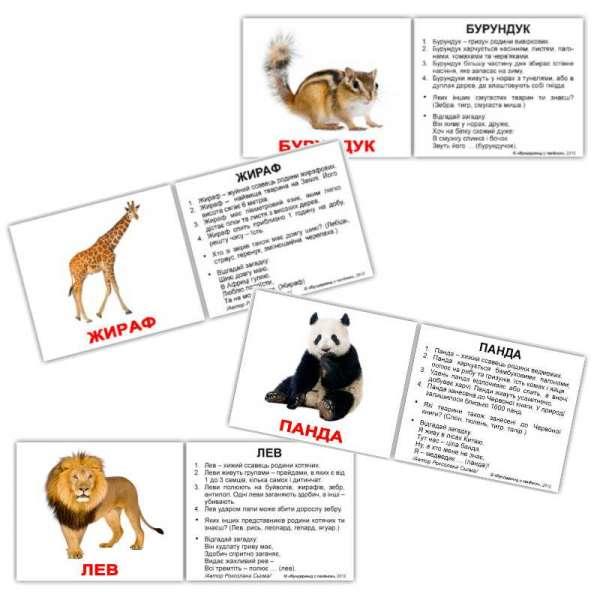 Картки Домана Дикі тварини з фактами мініІ-40