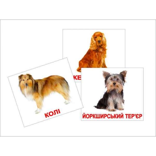 Картки Домана великі з фактами. Породи собак