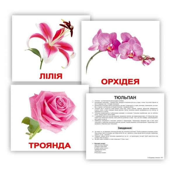 Картки Домана великі з фактами. Квіти