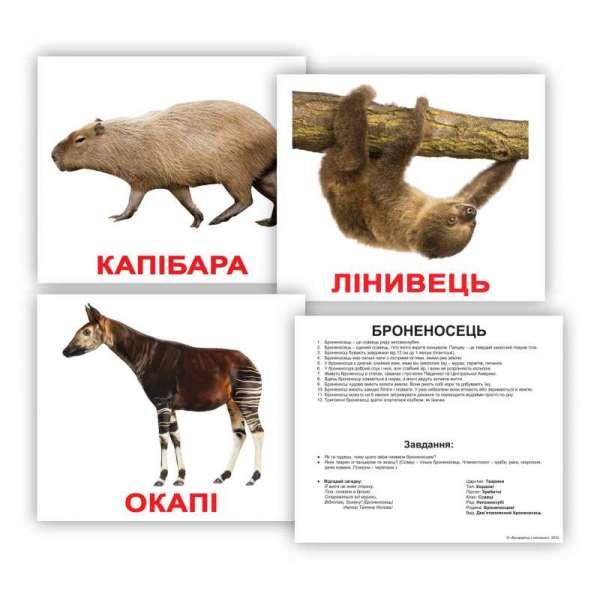 Картки Домана великі з фактами. Екзотичні тварини