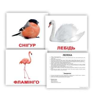 Картки Домана великі з фактами. Птахи
