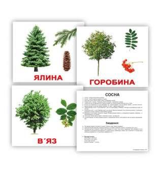 Картки Домана великі з фактами. Дерева