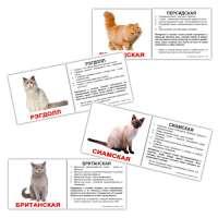 Карточки Домана Породы кошек с фактами мини-20