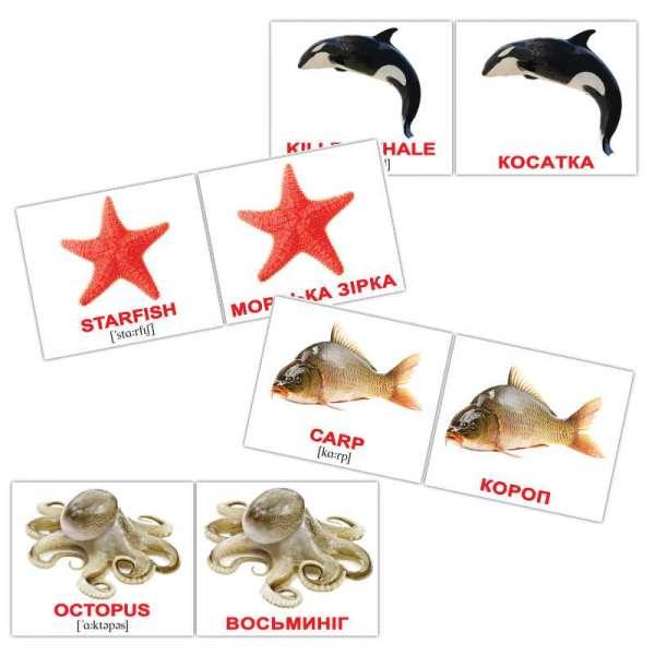 Картки Домана Водяні тварини/Water animals міні-40